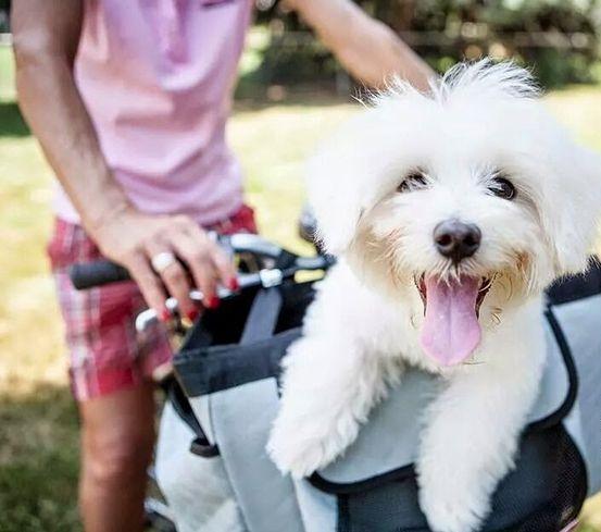 Comment faire du vélo avec mon chien