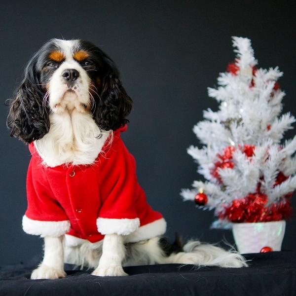 cadeaux de no l pour chien costumes et bonnets de no l. Black Bedroom Furniture Sets. Home Design Ideas
