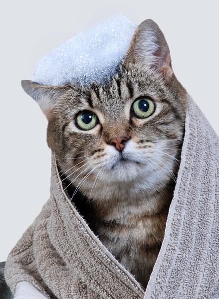 Le bain du chat