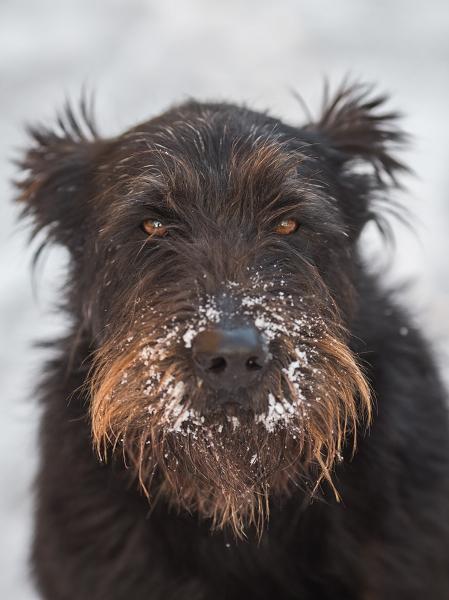 Mon chien et le froid