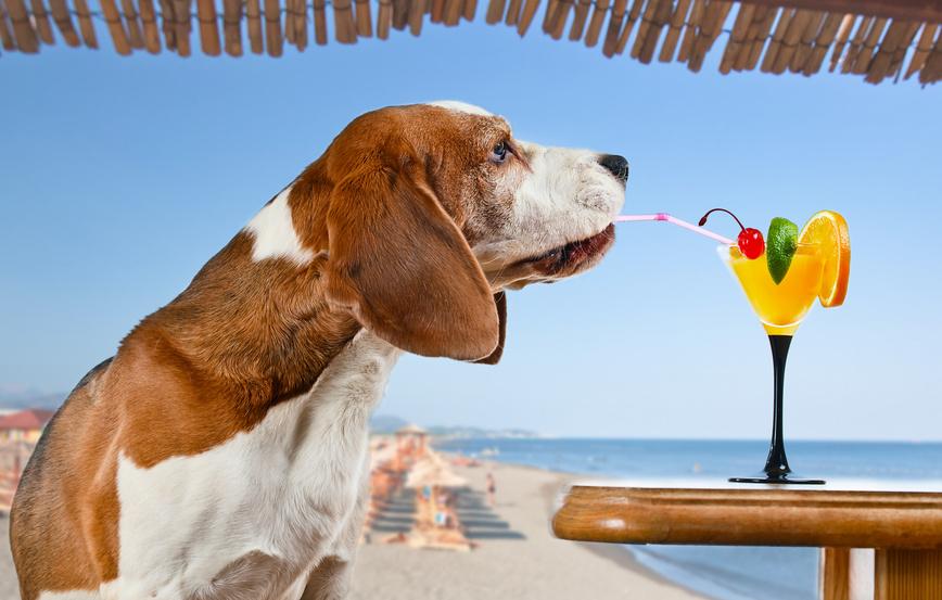 Recettes d'été pour chien