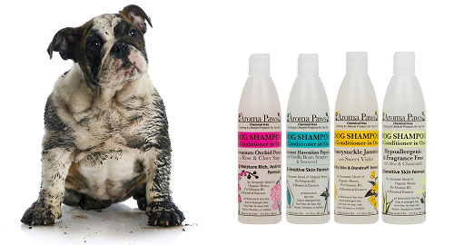Shampooing pour chien