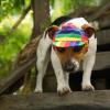 Casquette pour chien pour se protéger des rayons du soleil