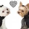 Sublime manteau harnais pour chien avec nœud orné d'un Swarovski