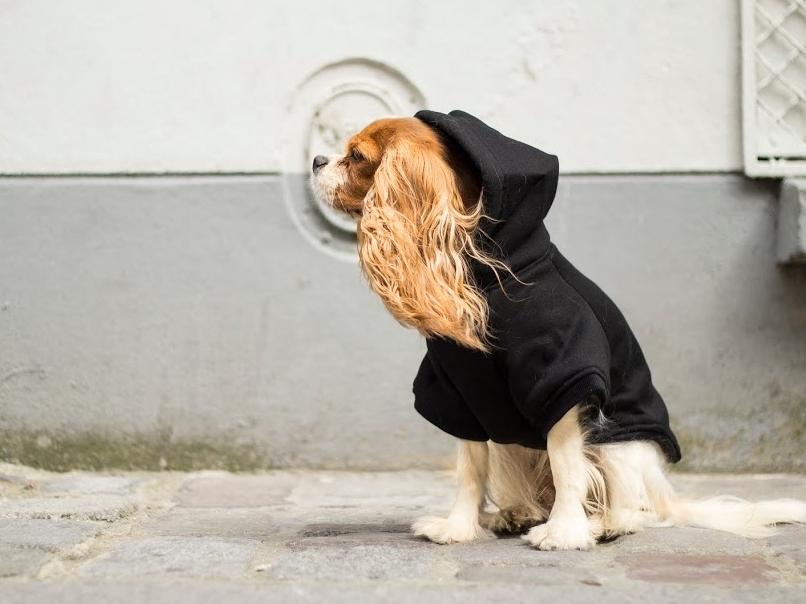 Casting des Pachas de la boutique pour chien et chat Oh ! Pacha