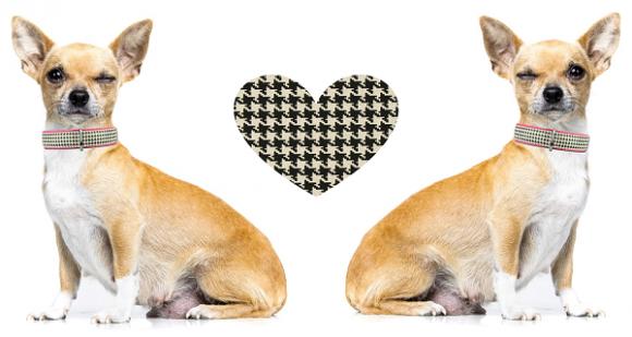 Collier pour chien Coco