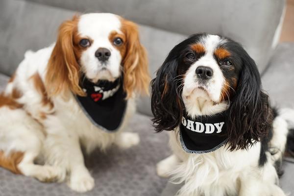 nouveaux bandanas pour chien impose ton style le blog de la boutique oh pacha. Black Bedroom Furniture Sets. Home Design Ideas