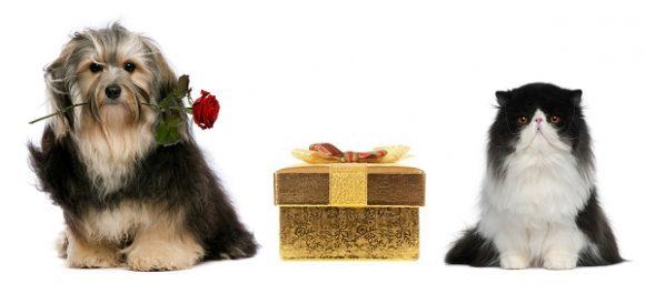 Boutique pour chien et chat Oh ! Pacha