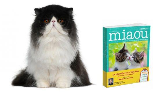 Des jouets pour chat Oh ! Pacha présentés dans la revue Miaou