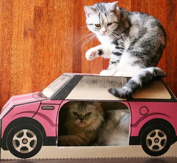 les jouets pour chat en solde le blog de la boutique oh pacha. Black Bedroom Furniture Sets. Home Design Ideas