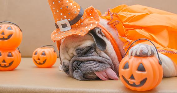 Biscuits pour chien Halloween