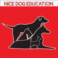 Nice Dog Éducation