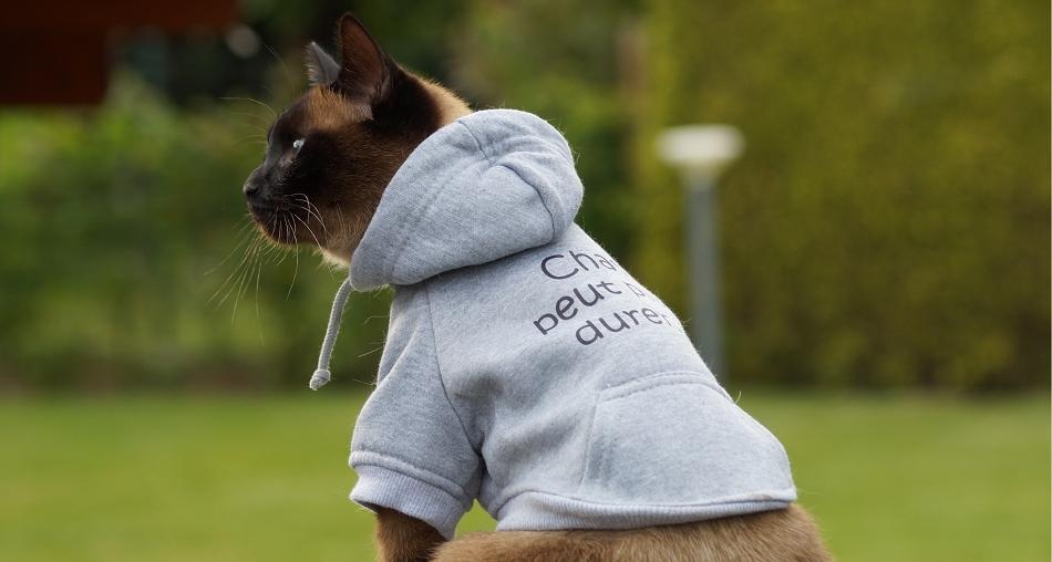 Sweat pour chat Chat peut plus durer - Oh ! Pacha