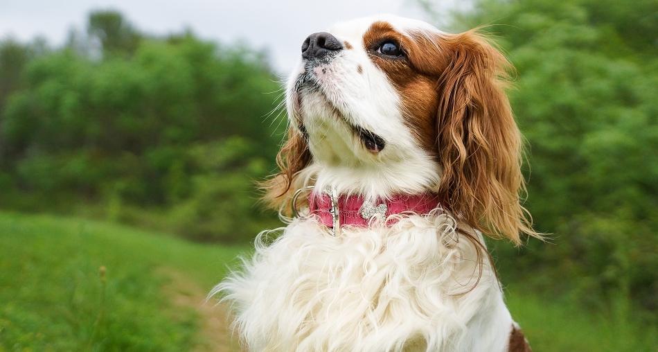 Collier rose en cuir pour chien - Oh ! Pacha