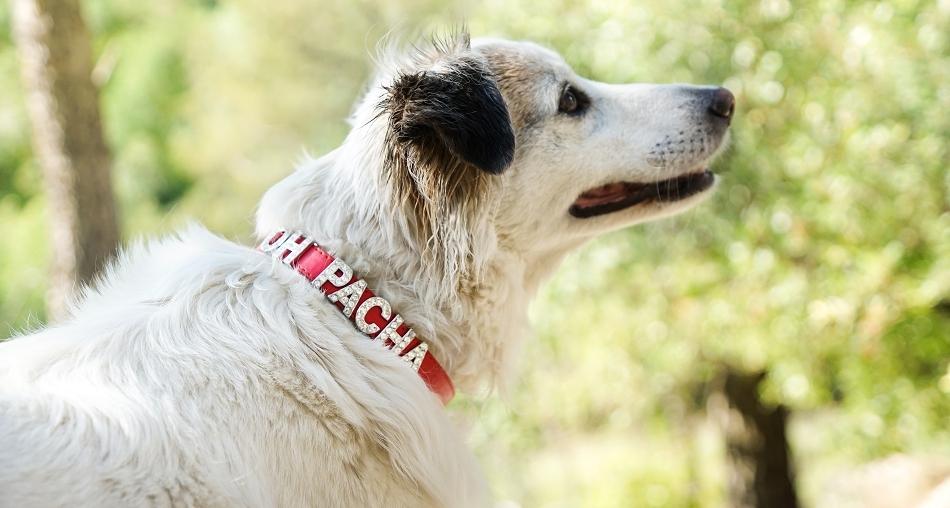 Collier pour chien à personnaliser rouge - Oh ! Pacha
