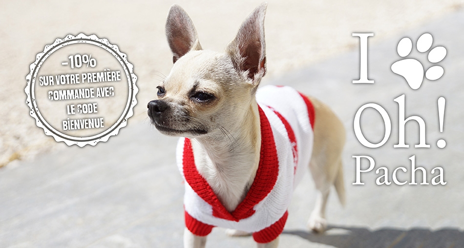 Pull pour chien petit ange - Oh ! Pacha