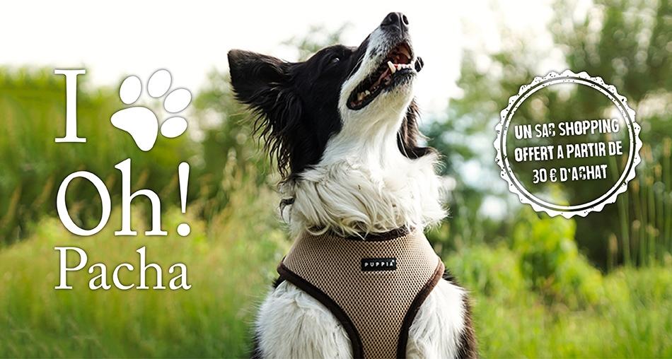 Harnais pour chien beige Puppia - Oh ! Pacha