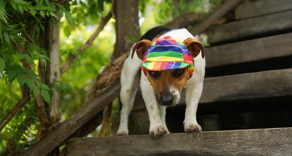 Casquette pour chien Jamaïque - Oh ! Pacha