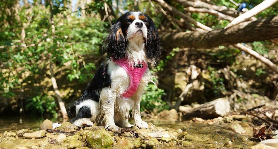 Harnais pour chien rose Puppia - Oh ! Pacha