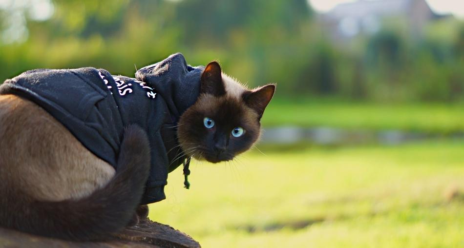 Sweat pour chat Petit mais costaud - Oh ! Pacha