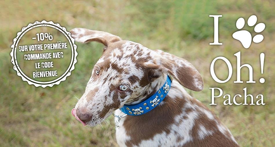Collier pour chien en cuir bleu tête de mort - Oh ! Pacha