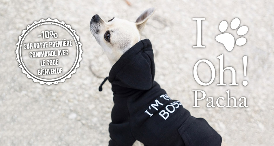 Sweat pour chien Boss - Oh ! Pacha
