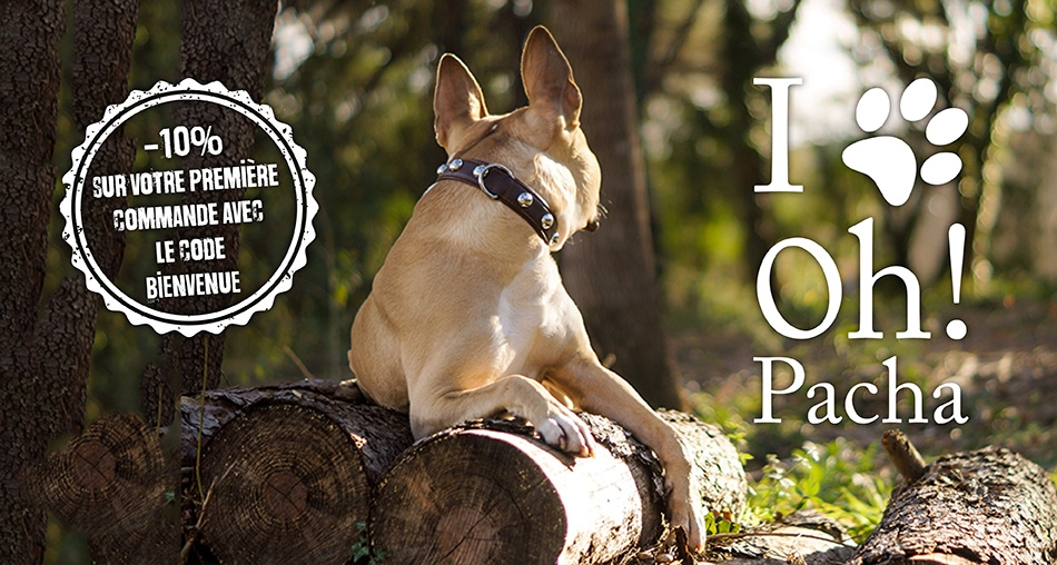 Collier pour chien Macchiato - Oh ! Pacha