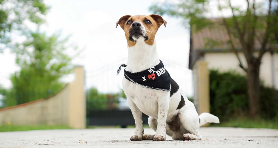 Bandana pour chien I love my Daddy - Oh ! Pacha