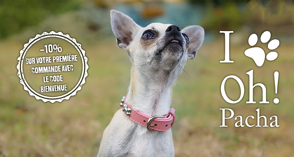 Collier pour chien baby rose en cuir - Oh ! Pacha