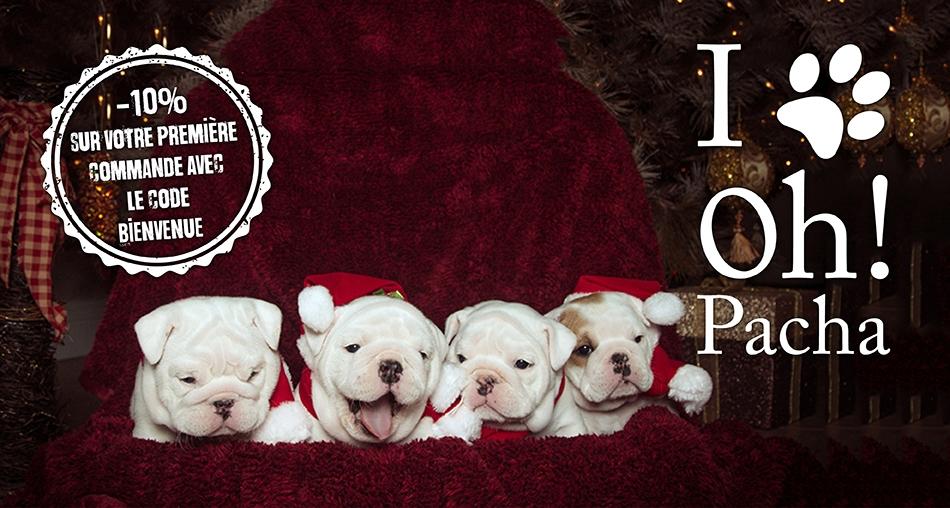 Bonnets et costumes de Noël pour chien et chat - Oh ! Pacha