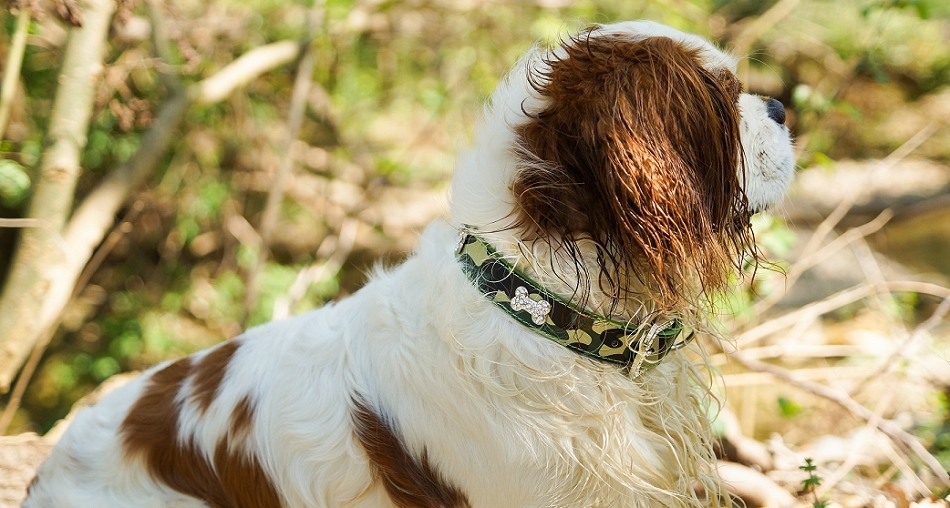 Collier camouflage pour chien - Oh ! Pacha