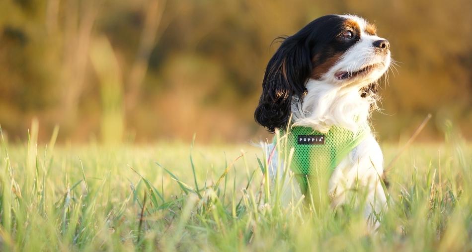 Harnais pour chien vert Puppia - Oh ! Pacha