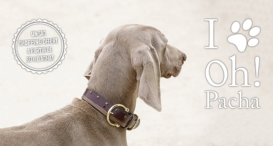 Collier pour chien Trinidad - Oh ! Pacha