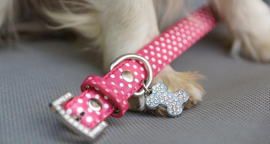 Collier pour chien rose à pois - Oh ! Pacha