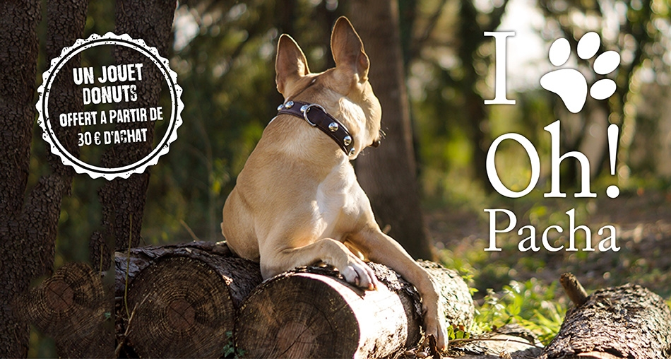 Jouet pour chien donuts - Oh ! Pacha