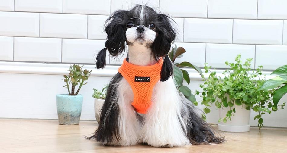 Harnais pour chien orange fluo Puppia - Oh ! Pacha