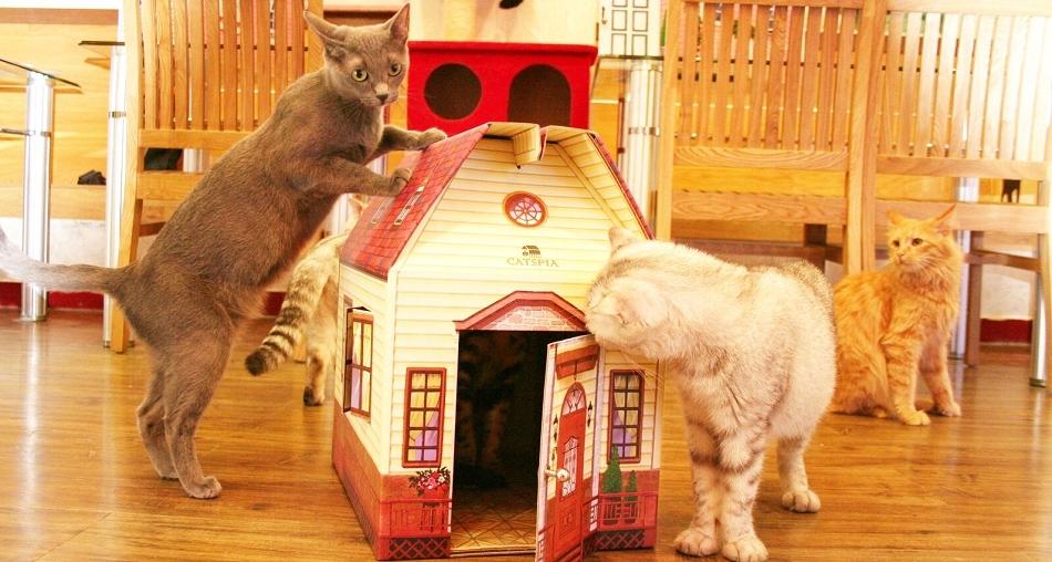 Maison pour chat - Oh ! Pacha