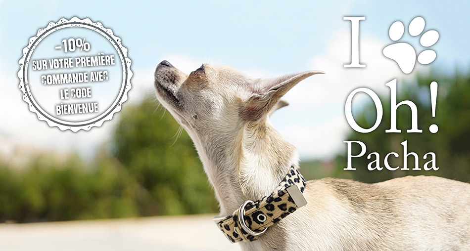 Collier pour chien Piccadilly - Oh ! Pacha